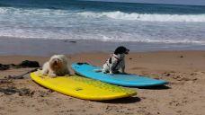 tana&kiwi_surf